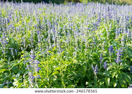 flower garden background - stock photo