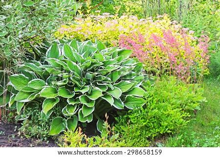 Flower garden with perennials in the garden - stock photo
