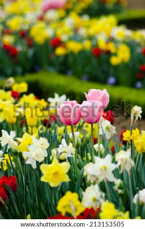 Flower garden with tulip and others