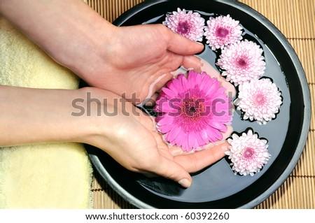 Flower gerbera in womans hands - stock photo