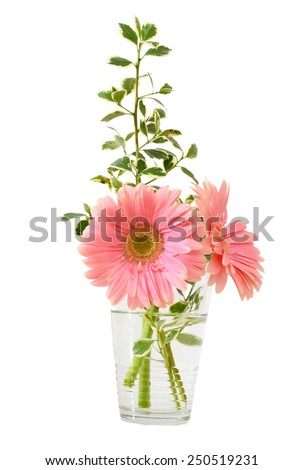 Flower gift: Glass vase with couple of pink daisy flowers  - stock photo