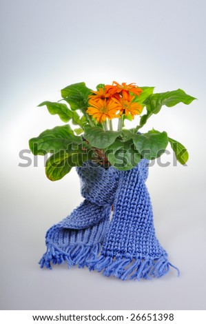 Flower got cold and put on a scarf - stock photo