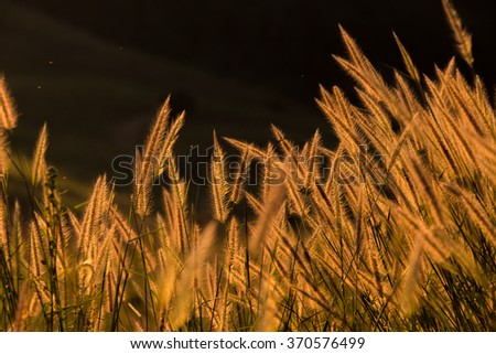 flower Grass blowing in the wind motion blur sky background