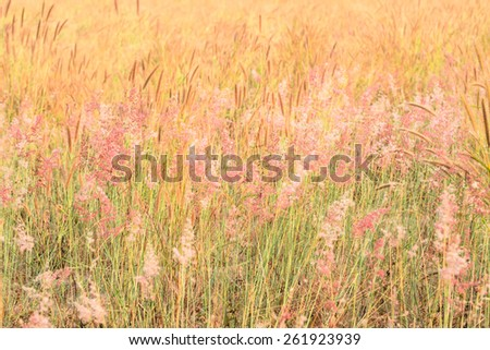 Flower grass field - stock photo