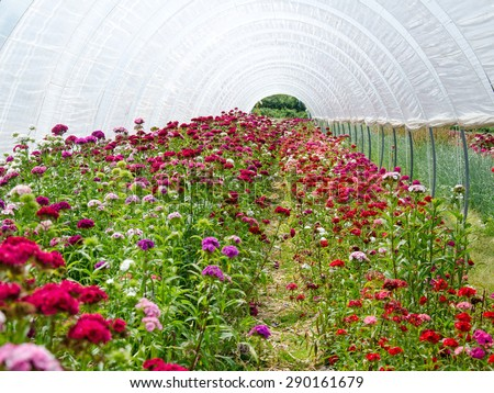 Flower greenhouse - stock photo