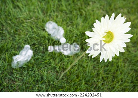 Flower growing next to discarded water bottles, high angle view - stock photo