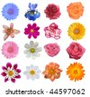 Flower heads isolated on a white background ( Full size in portfolio) - stock photo