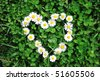 Flower heart in grass - stock photo