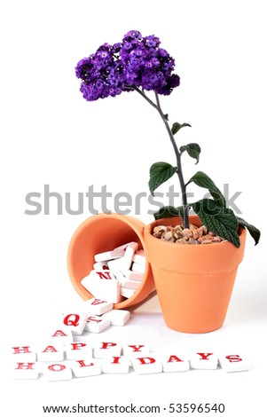 Flower in a ceramic pot, nearby from a similar pot letters get enough sleep and develop in inscription Happy Holidays.