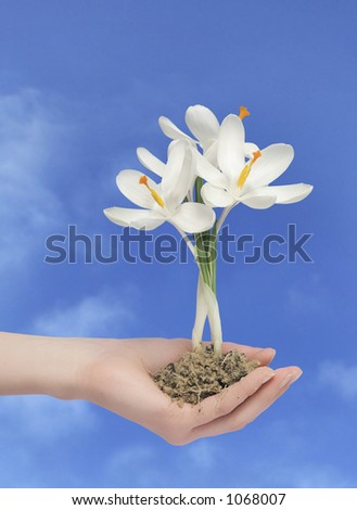 flower in a hand with path - stock photo