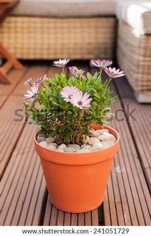 Flower in a pot on the balcony - stock photo
