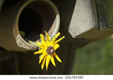 Flower in  exhaust-pipe of a modern car, concept of environment and ecology - stock photo