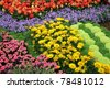 flower in garden - stock photo