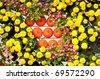 Flower in Garden , pumpkin - stock photo