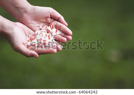 flower in hand - stock photo