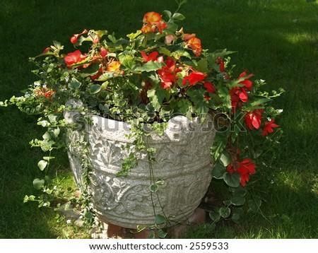 flower in park - stock photo