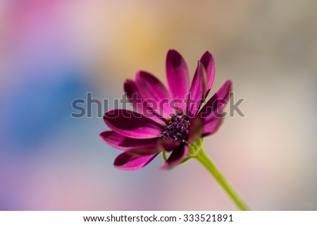 Flower in pastel tones
