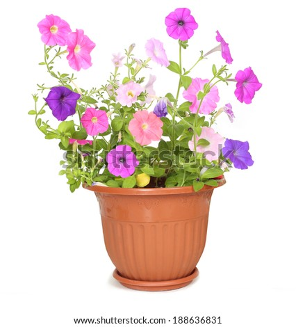 flower in pot - stock photo