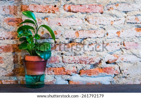 Flower in pot with brick wall  - stock photo