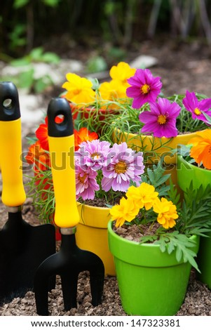flower in pots with gardening tools - stock photo