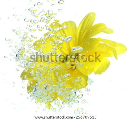 Flower in sparkling water - stock photo
