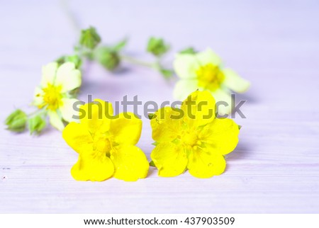 flower in table