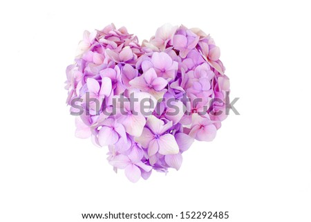 flower in the form of heart isolated on white - stock photo