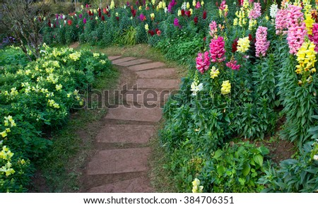 Flower in the garden with stone walkway