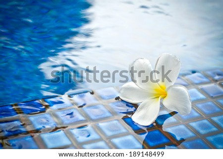 flower in the pool - stock photo