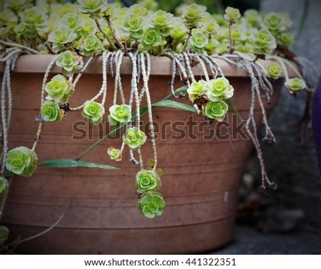 flower in the pot - stock photo