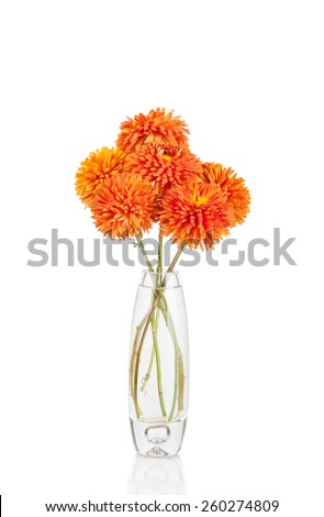 Flower in vase, isolated on white background - stock photo