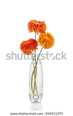Flower in vase, isolated on white background - stock photo