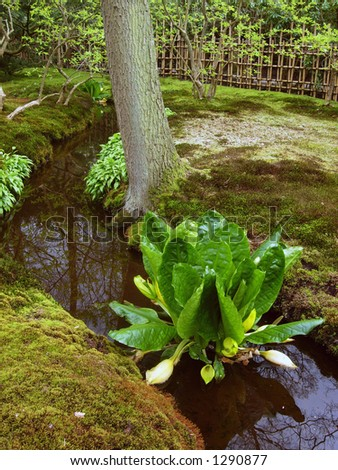 flower in water - stock photo