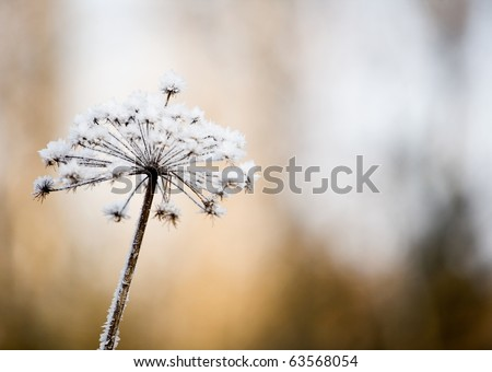 Flower in winter with frozen ice crystals - stock photo