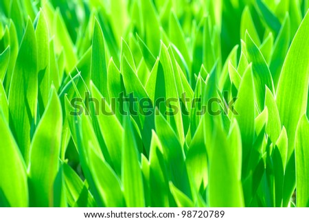 flower iris green leaves background - stock photo