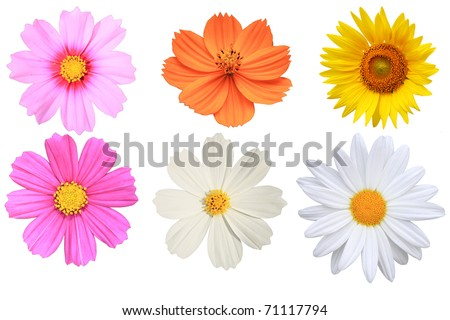 Flower Isolated - stock photo