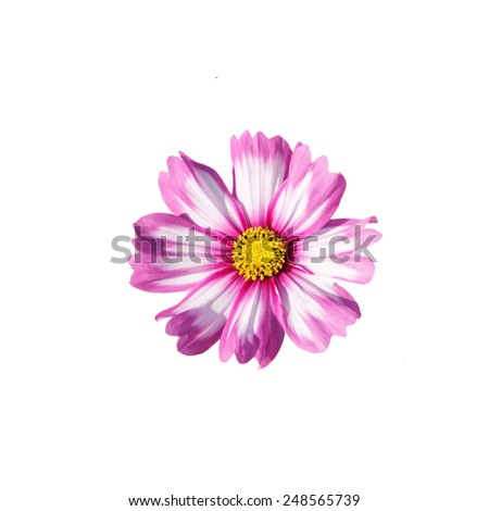 flower isolated on a white background
