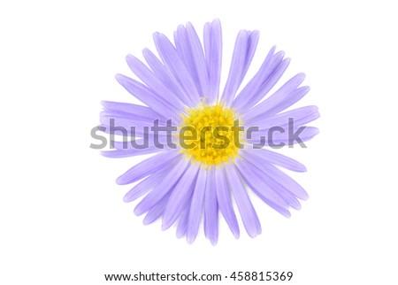 flower isolated on white - stock photo