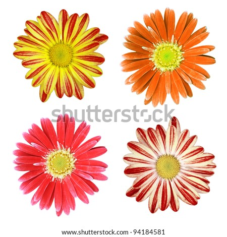 Flower Isolated on white - stock photo