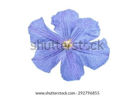 flower isolated on white background - stock photo