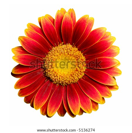 Flower isolated on white background.