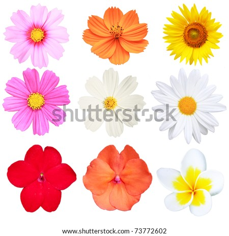 Flower Isolated on white background - stock photo