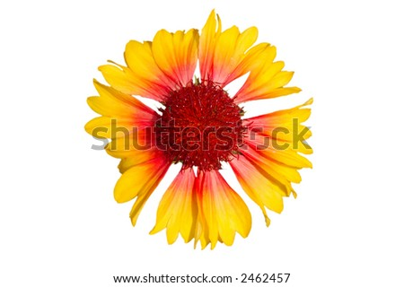 Flower isolated on white, clipping path included