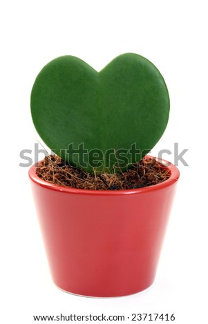 flower like heart isolated on white - stock photo