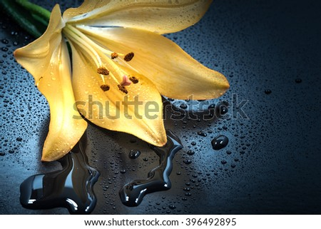 Flower, lily, water droplets, close-up, macro. - stock photo
