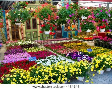 Flower market, Montreal - stock photo