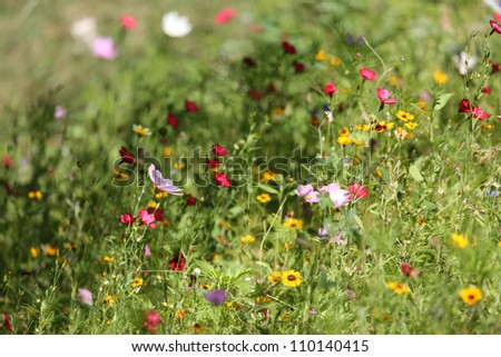 flower meadow - stock photo