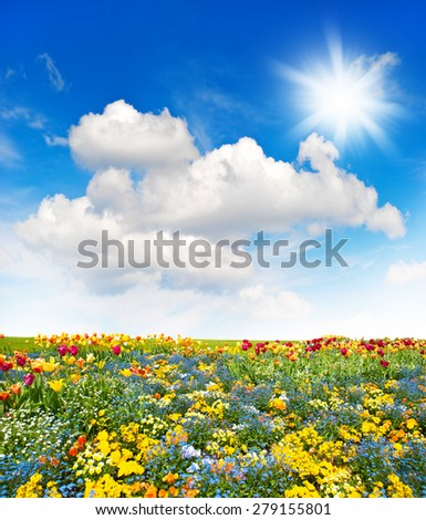 Flower meadow and green grass field over cloudy blue sky. Spring landscape. Sunny day - stock photo