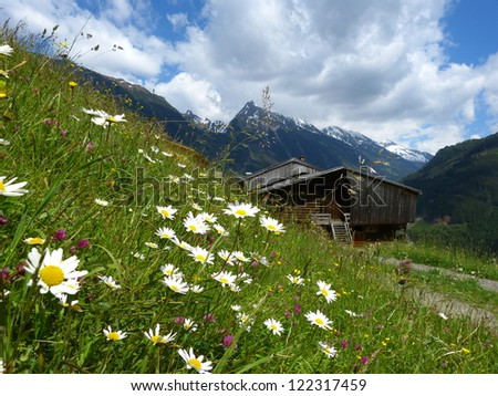 Flower meadow and mountain trail - stock photo