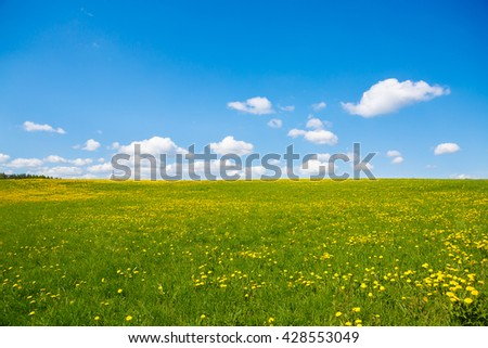 Flower meadow and the blue sky to the horizon. Pastoral panorama of nature summer. Beautiful rural landscape of a Sunny day. Field with yellow dandelions. - stock photo